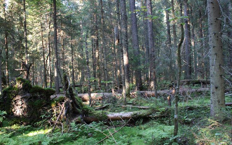 Центрально-лесной заповедник