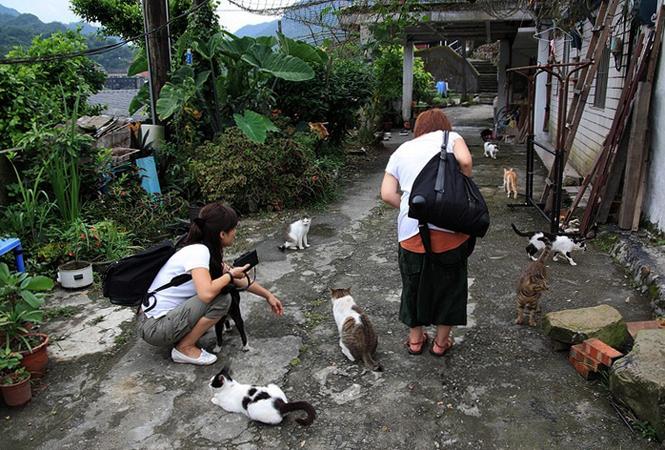 Деревня кошек Houtong