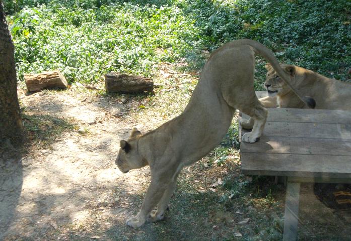 Зоопарк Shou Shan