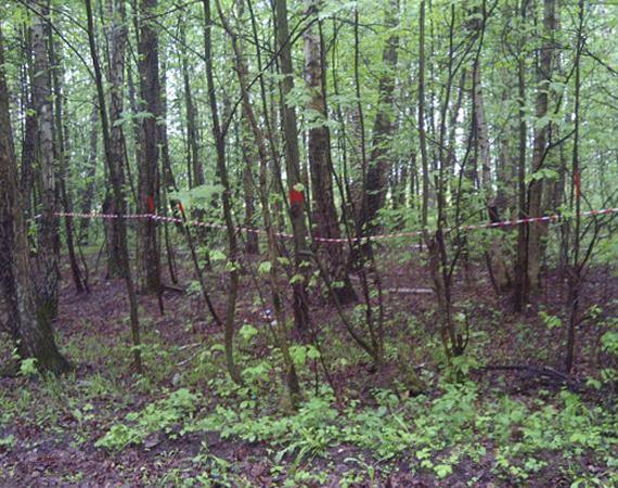 Климовский лес