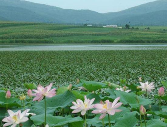 Озеро «Лотос»