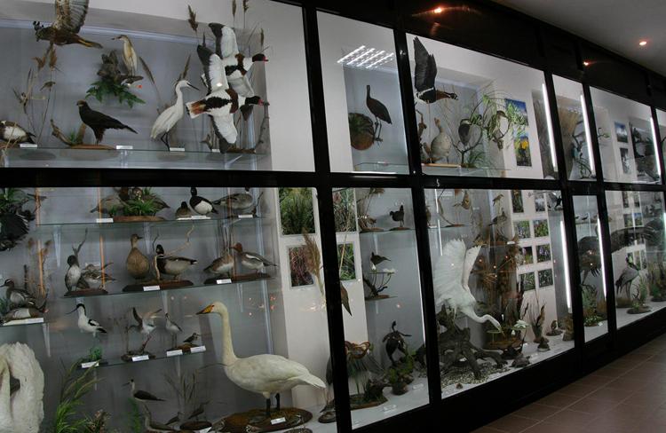 Музей природы Карадага