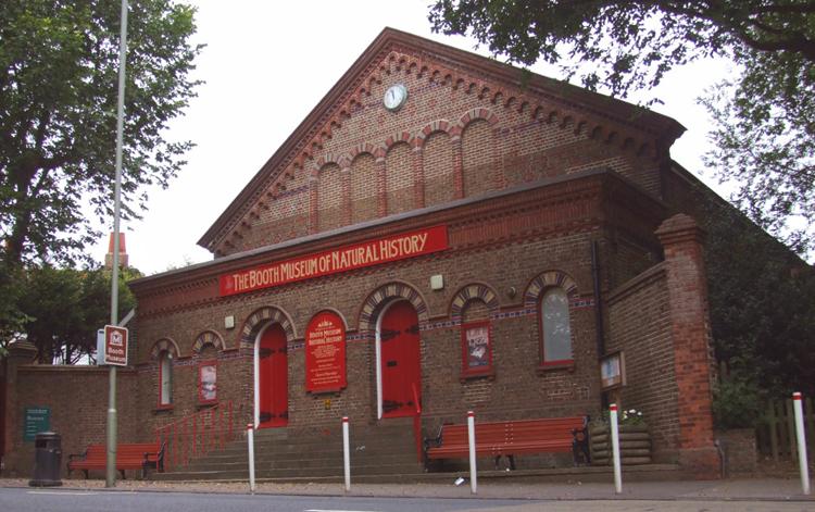 Музей естественной истории Бута