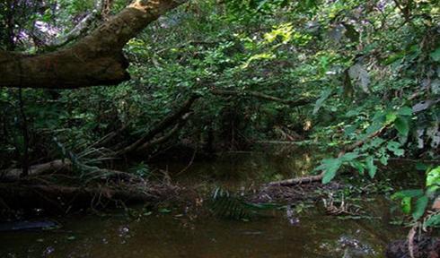 Национальный парк Янгамби