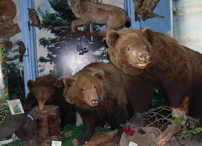 Внутри музея Чуйского тракта