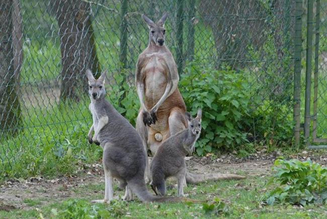 Австралийский парк