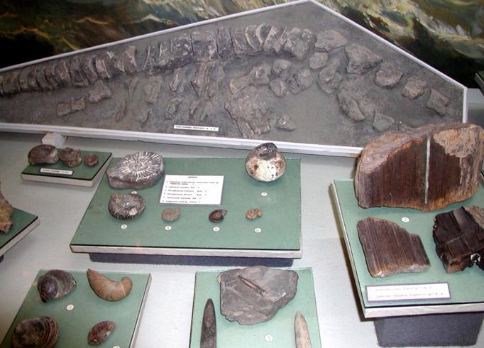 Внутри природоведческого музея