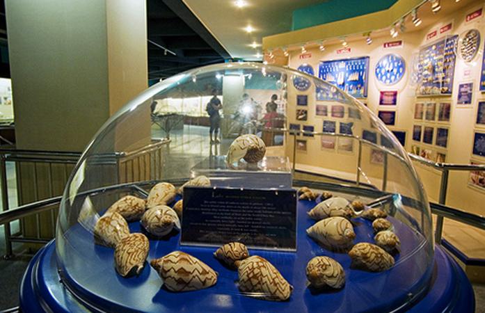 Внутри музея раковин