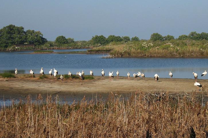 Орнитологический парк Ле-Теш