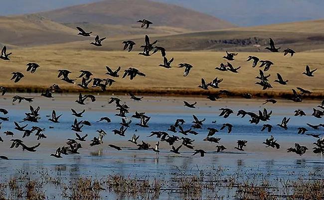 Национальный парк Джавахети