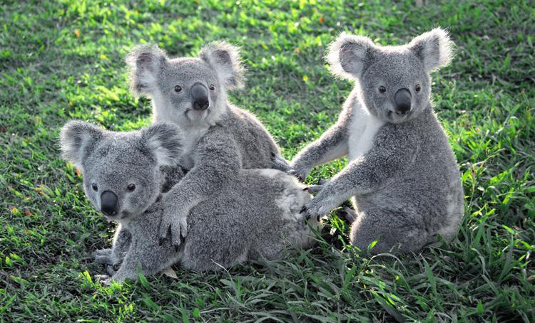Парк коал