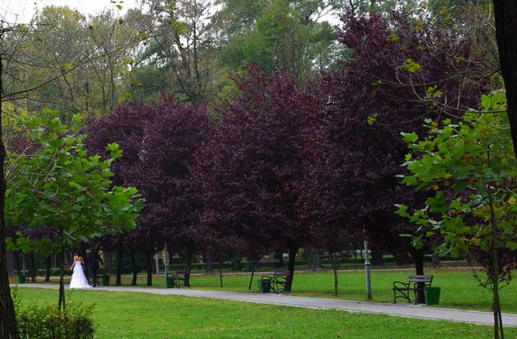 Парк Костюшко