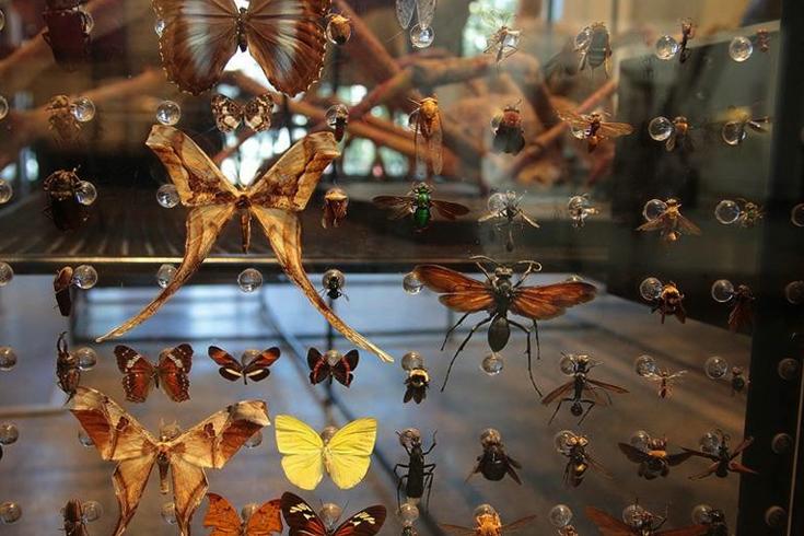 Внутри зоологического музея