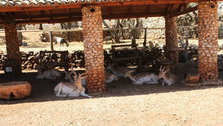 Зоопарк Askos Stone Park