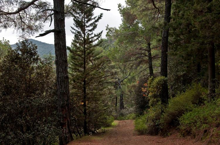 Национальный лесной парк