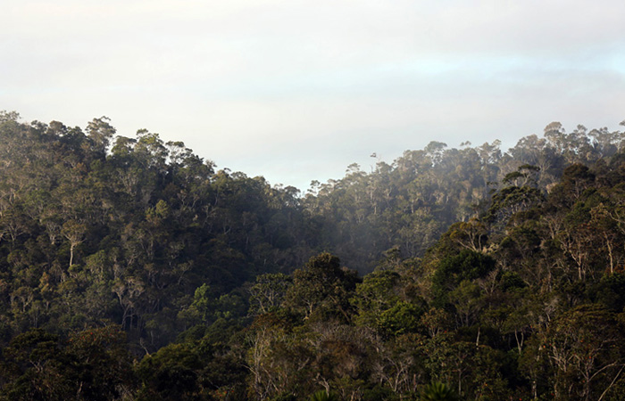 Национальный парк Андасибе-Мантадия