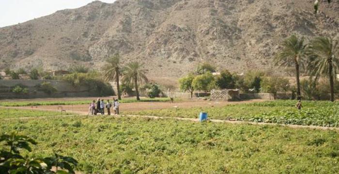 Сады Айн-Аль-Мадхаб
