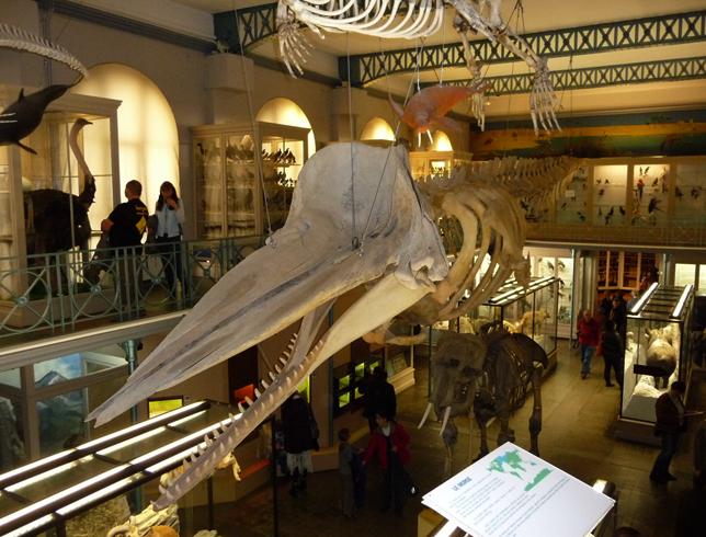 Внутри музея естественной истории