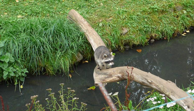 Зоопарк Гданьск-Олива