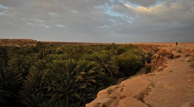 Пальмовый оазис