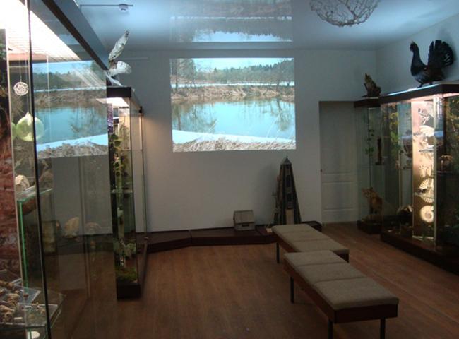 Музей природы Осинского Прикамья