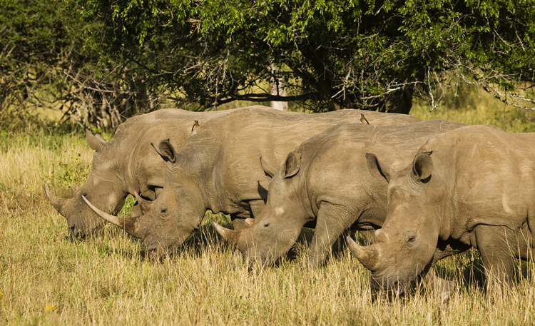 Национальный парк Хлухлуве-Умфолози