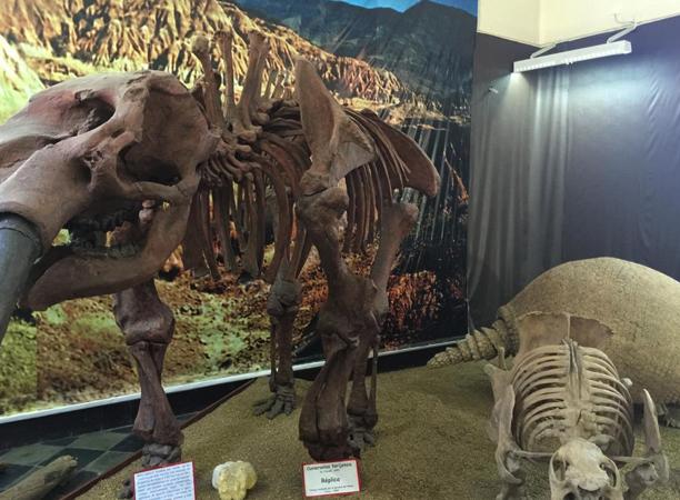 Музей археологии и палеонтологии в Тарихе