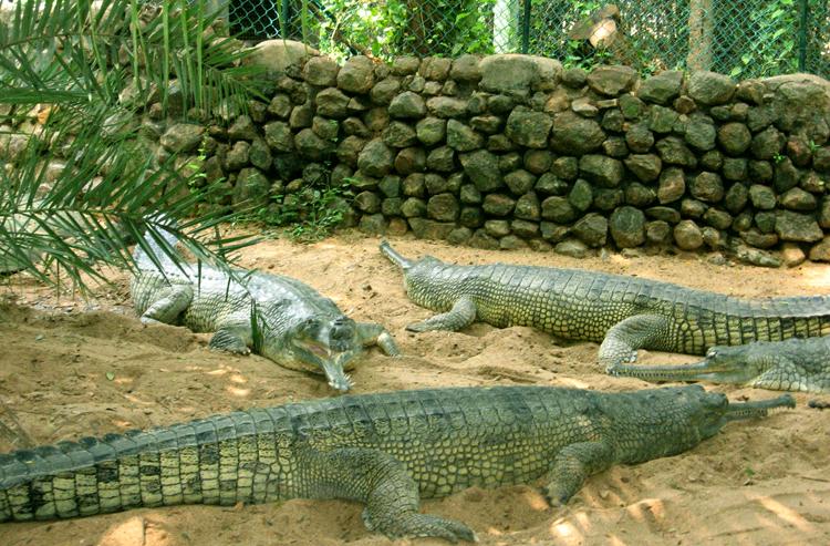 Национальный парк Гуинди и террариум