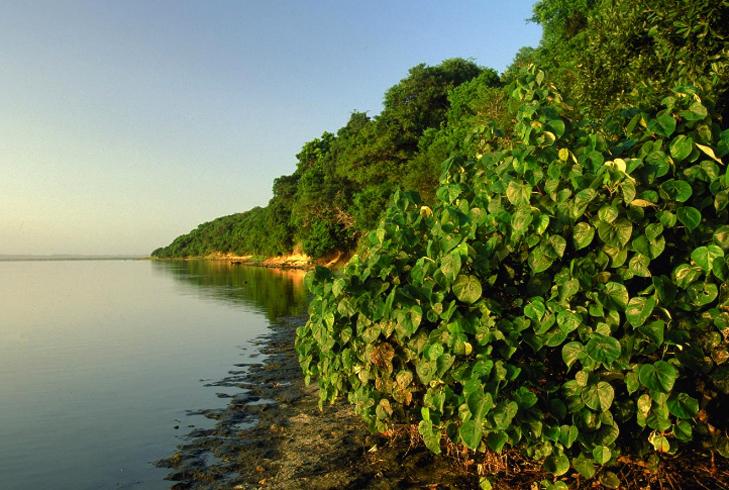 Водно-болотный район Исимангалисо