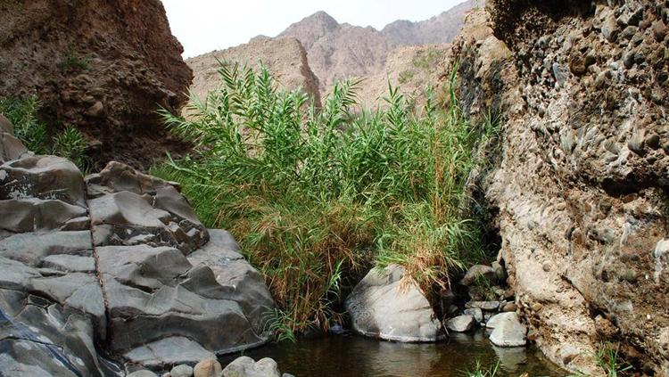 Национальный парк «Вади Вурайя»