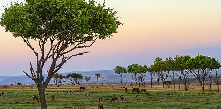 Национальные парки Гвинеи-Бисау