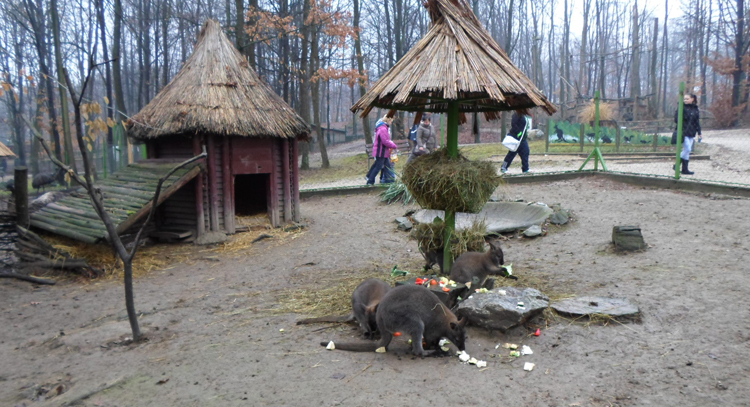 Городской зоопарк