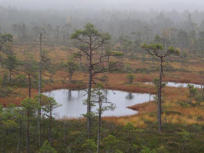 Заповедное болото Тейчи
