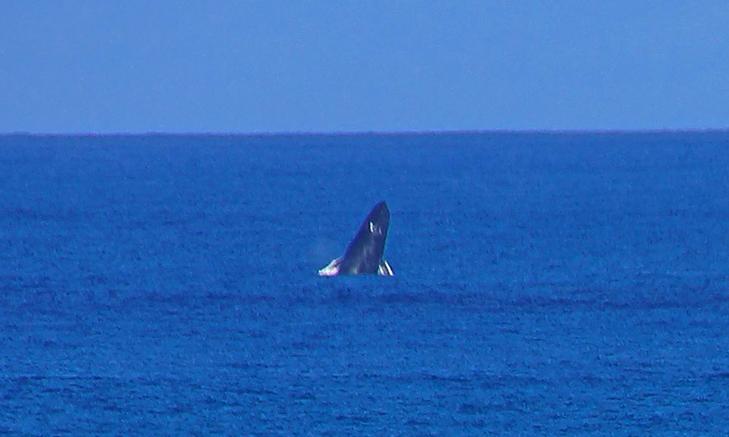 Китовая прогулка