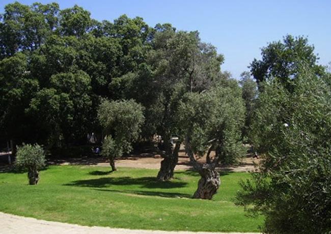 Парк Биньямин