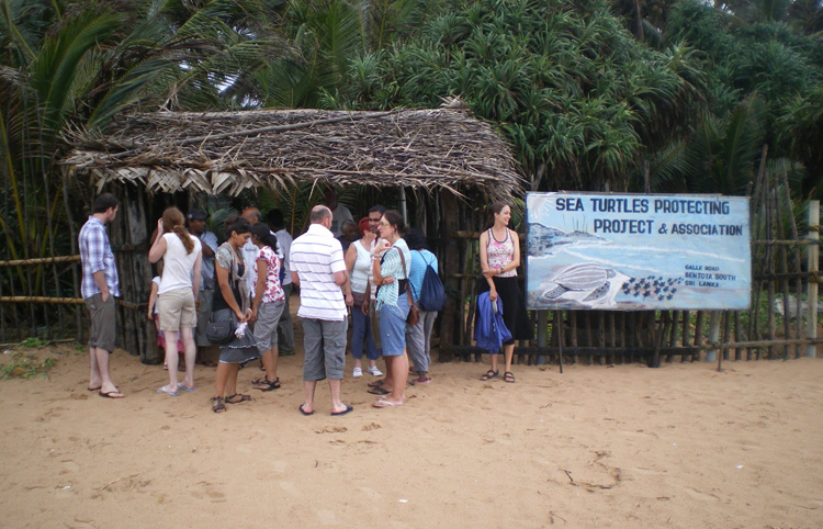 Sea Turtle Protection Association