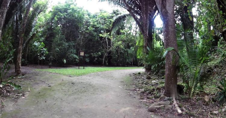 Джунгли Косты Майи