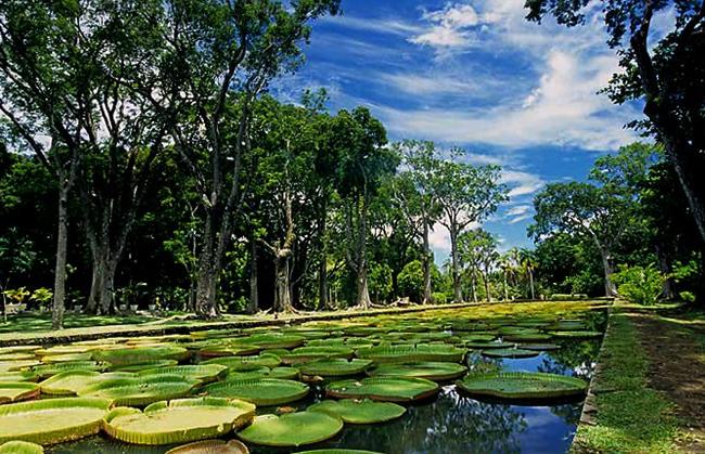 Национальный ботанический сад Маврикия