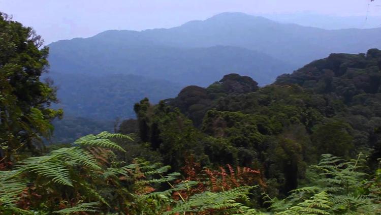 Национальный парк Ньюнгве