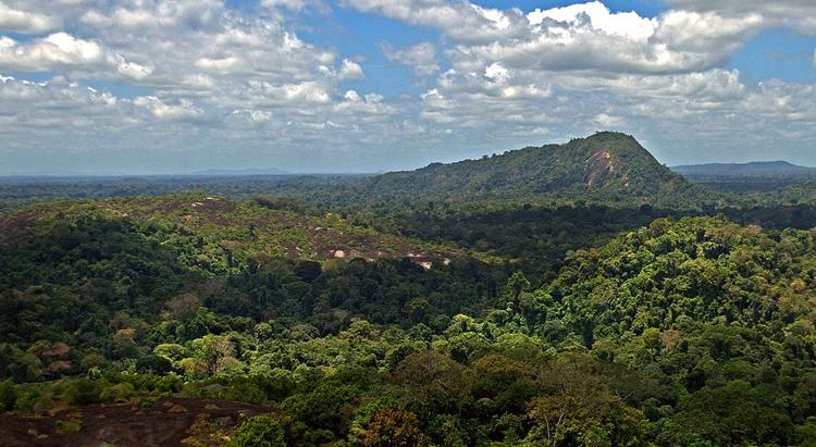 Центральный заповедник Суринама