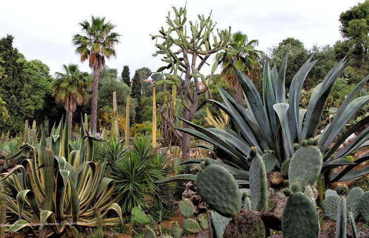 Сад Ботанчисекий Пинья де Роса