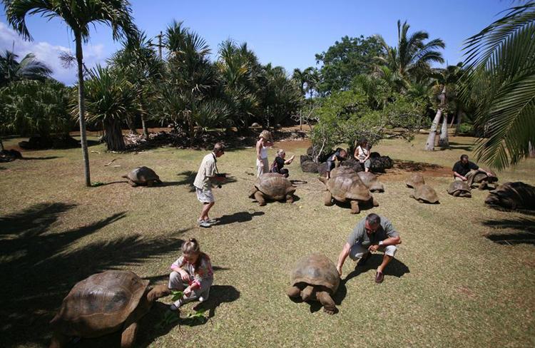 Парк крокодилов и гигантских черепах Маврикия
