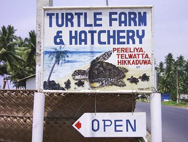Черепаховая ферма