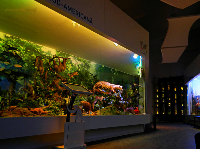Внутри музея естественной истории Григоре Антипа