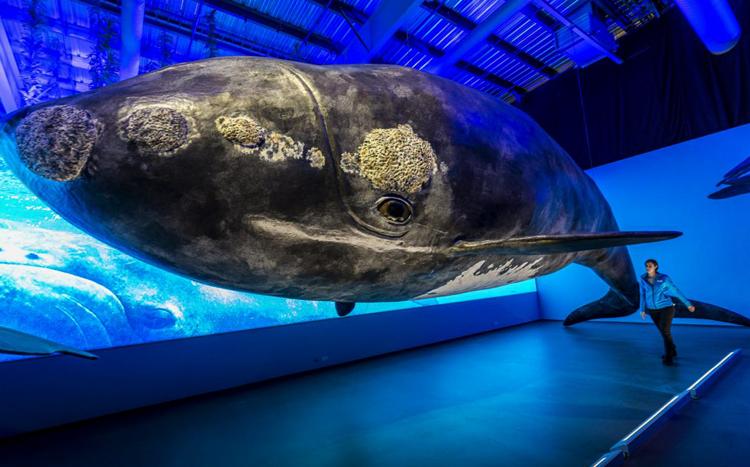 Музей, посвященный китам