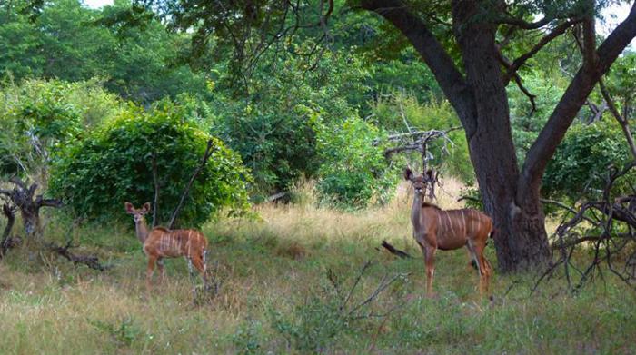 Национальный парк Мамили
