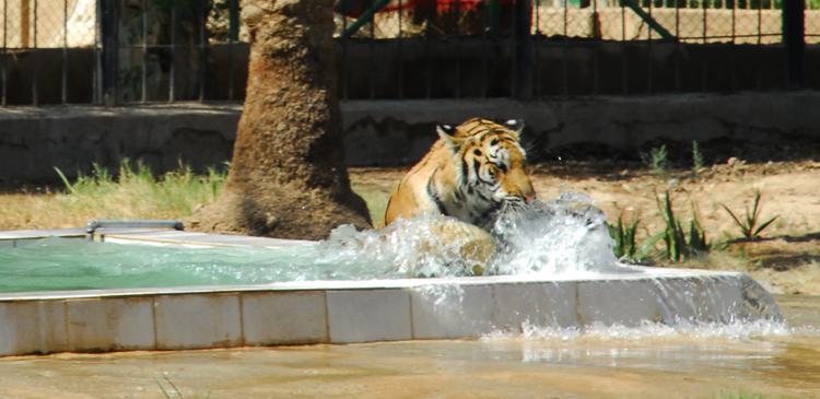 Багдадский зоопарк