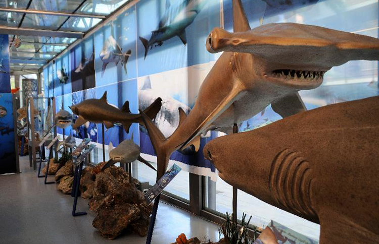 Внутри музея естественной истории Средиземноморья