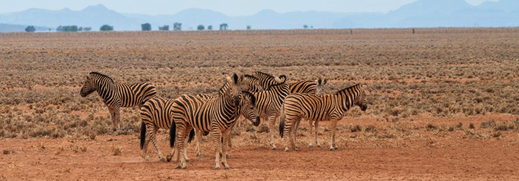 Национальный парк Намиб – Науклуфт