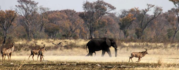 Национальный парк Каудом
